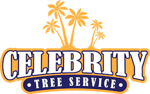 Tree Pruning Arborists | Beverly Hills | Tree Trimming | Tree Removal